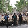Saint-Rémy de Provence : 33ème transhumance le 16 mai 2016